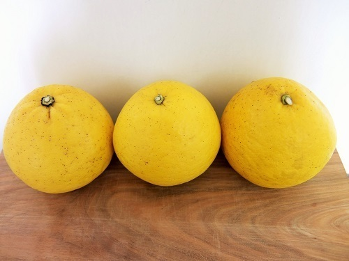 柑橘ピール1941.jpg